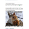 Автоматический парсер из Вконтакте в Telegram