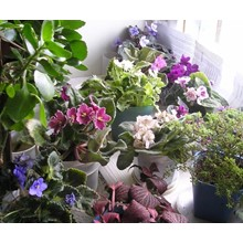 Encyclopedia of  Plants About all secrets of Planting