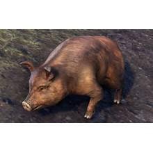 Bristlegut Piglet (pet) + 15 days ESO Plus + 750 Crown✅