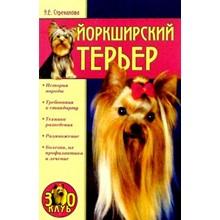 Book Yorkshire Terrier