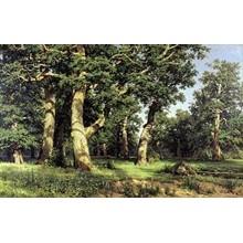 Ivan Shishkin - Oak Grove. 1887