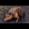 Bristlegut Piglet (pet) + 15 days ESO Plus + 750 Crown